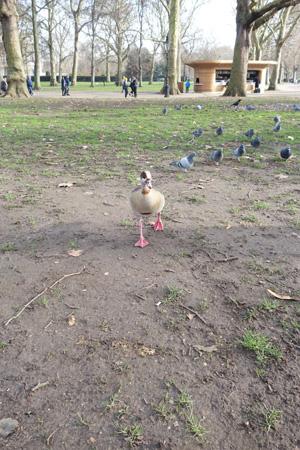 thegreenpark2.jpg